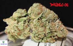 Diablo OG Nug1 (Humboldt Relief) Tags: losangeles weed 420 og pot marijuana herb cannabis ganja medicalmarijuana medicalcannabis cannabisindica diabloog humboldtrelief