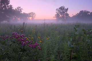 Morning Prairie Mist (take 2, one year later), Theodore Stone Preserve, Cook County, Illinois