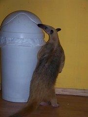 Sniffing the trash can