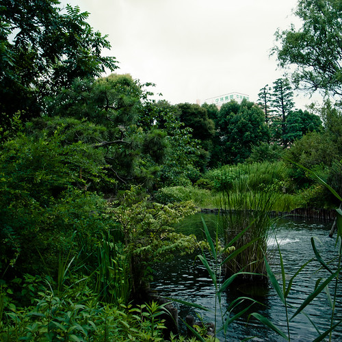 Mukojima Hyakkaen Garden, Marsh Side