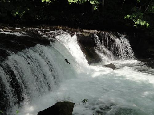 さくらの滝