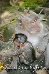 Indonesia_2011-69.jpg