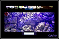 021a (Mobeen Mazhar) Tags: road city sunset sea beach night marina sunrise mall zoo al gulf centre towers 360 center crescent kuwait souq maidan salmiya avenues scientific ahmadi sharq fahaheel hawally hamra failaka safat agaila farwaniah