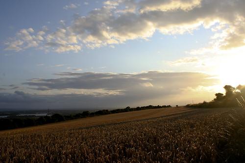 Spent Cornfields On Portsdown Hill