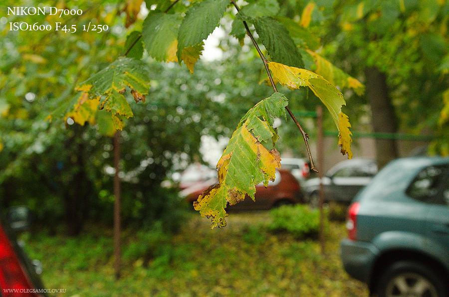тест на высокой светочувствительности Sony Nex-5 nex-7 Nikon d7000