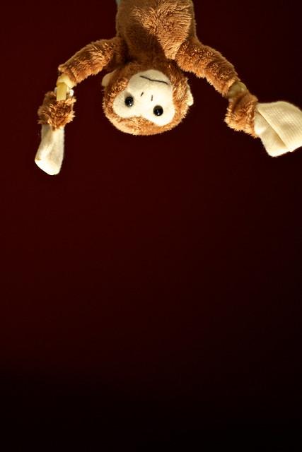 271/365: Monkey