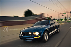 #41 Rollin' on the streets (Abdulla Attamimi Photos [@AbdullaAmm]) Tags: blue ford sport speed photography photo nikon photos fast photographic shelby mustang gt speedy eleanor fordmustang 2008 v8 2010  abdullah amm    d90   tamimi          attamimi     desamm altamimialtamimi     abdullaammnet abdullaammcom