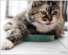 Cally (hehaden) Tags: white animal closeup cat floor kitty tortoiseshell stretch tortie longhaired foammat