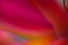 "Meld in Colors (ٌYousef Al-Asfour) Tags: abstract art nature wow nikon nikkor magical photooftheday naturesfinest blueribbonwinner nikonians outstandingshots nikonstunninggallery natureplus abigfave outstandingshotshighlight anawesomeshot anawesomeshotb impressedbeauty aplusphoto ""superbmasterpiece"" natursfinest diamondclassphotographer flickrdiamond excellentphotographerawards theunforgetablepicture ~vivid~ naturewatcher anawesomeshot""ysplixworldbest""wonderworld""""shieldofexcellencesellective"