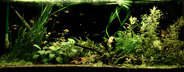 420 litre: Ludwigia removed