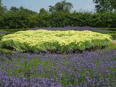 Belmont Gardens (golygfa) Tags: garden kent belmont lavender mandela