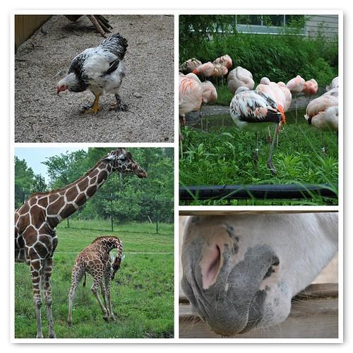 6/26/11 zoo mosaic
