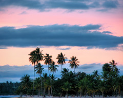 Evening Sky (sunbeem) Tags: sunset sky holiday beach sand colours dominicanrepublic palmtrees royalpalm wow1 wow2 platinumheartaward doublyniceshot tripleniceshot ringexcellence flickrstruereflection1 flickrstruereflection2 flickrstruereflection3 flickrstruereflection4 flickrstruereflection5 4timesasnice 5timesasnice