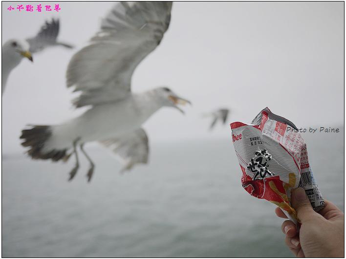 仙台松島遊船餵海鷗-27.jpg