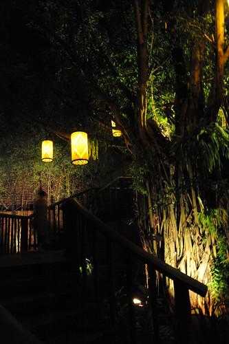 The Tree house bar.