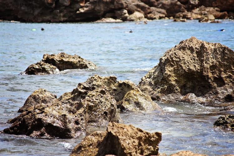 Sharks Cove North Shore copy