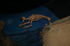 Sabretooth Tiger Jump
