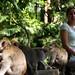 Divertindo-se no Templo dos Macacos em Ubud
