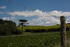 Caminhos para Lapa-PR (Edison Gonalves) Tags: paran paisagens lapa edisongonalves mygearandme