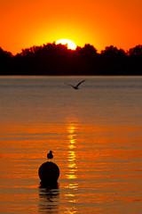 Sonnenuntergang im Hafen, sunset, Nonnenhorn, Bodensee (_Kolano_) Tags: sonnenuntergang möwe bodensee nonnenhorn