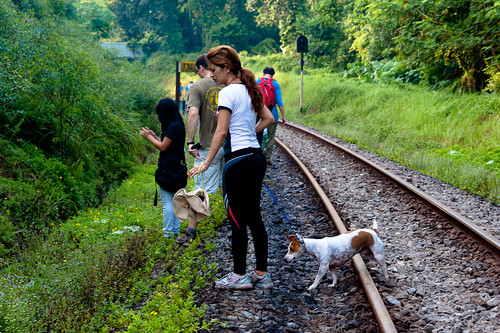 As a dog owner and lover, I just have to photograph our canine friends. This one walked the tracks as well!