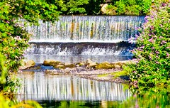 Weir reflections (Steve-h) Tags: flowers ireland dublin sun nature water upload reflections river rocks bushes weir dodder earlymorninglight