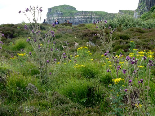Flora and Geology, Isle of Skye