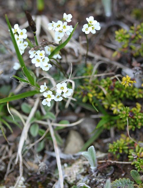 wildflower13