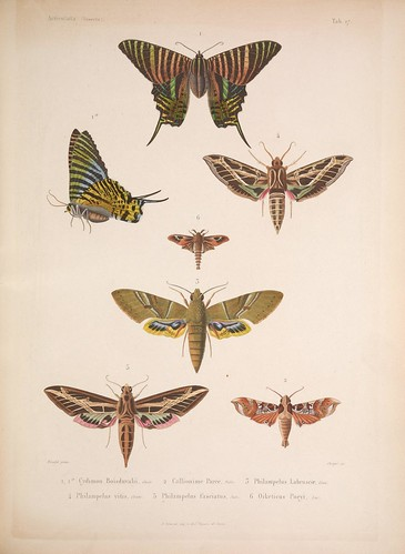 Illustration from an atlas of twenty plates that constitutes one volume of 'Histoire Physique, Politique et Naturelle de l'ile de Cuba' (1838-1857), online via the Biodiversity Heritage Library, Courtesy of BibliOdyssey.