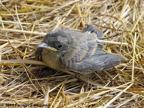 Baby Bird 2