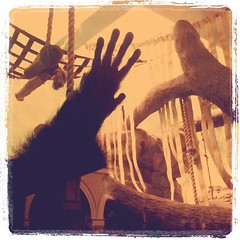 Lemur hand (Jason Aaron) Tags: square squareformat lordkelvin iphoneography instagramapp uploaded:by=instagram foursquare:venue=4d4eeb8fa8fba1430d79491a