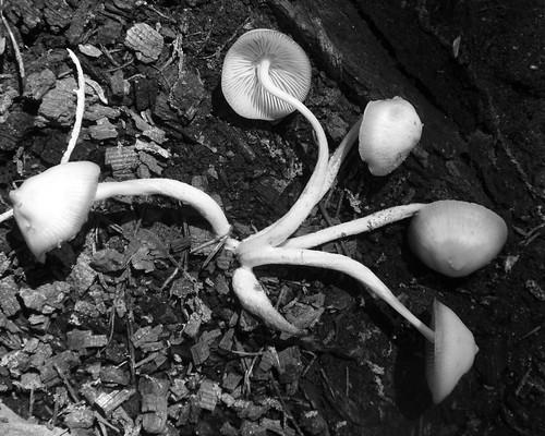 Fungus 02 bw