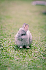 Hello Ubaa!! :'') (puguhindra) Tags: cute rabbit animal animals indonesia interestingness interesting nikon bokeh 85mm f2 rabbits yogyakarta jogjakarta nikkor mygarden supershot cuterabbit af85mmf14d bokehlicius flickraward kelinci d7000 nikond7000