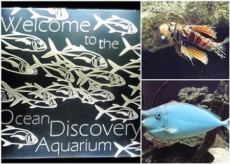 ocean-discovery-aquarium