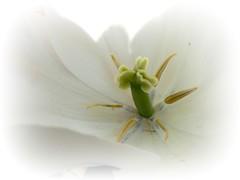 Deep inside, (♥ Katie ann. Off more than on.) Tags: macroflowers sailthesevenseas shieldofexcellence amazingdetail flowersmacroworld