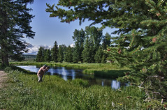 Dave at Schwabacher's Landing (slingscode) Tags: usa dave landing wyoming tetons wy jacksonwyoming schwabachers jeffclow dirtcheapphotography