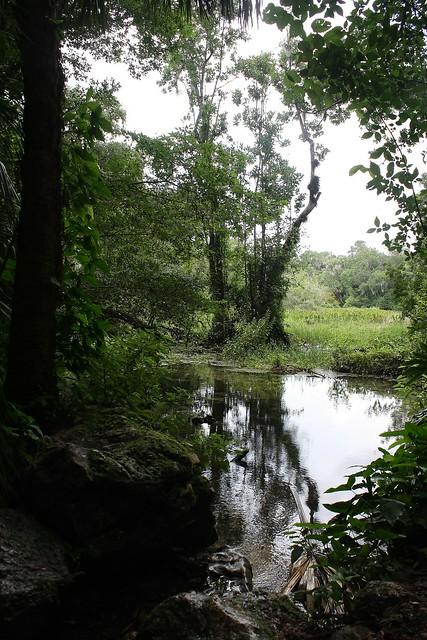swamp _
