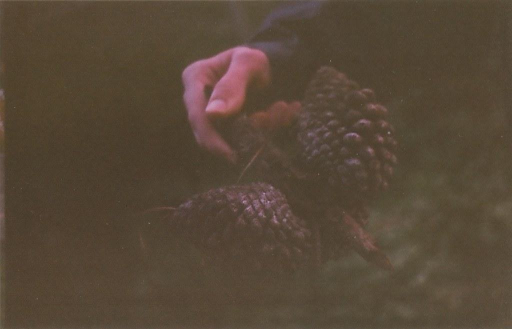 cody pine cone