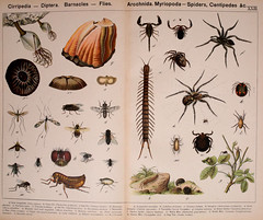 animals juvenileliterature pictorialworks zoology smithsonian institution libraries sil barnacle flies spider centipede gnat cranefly fly gadfly botfly bluebottle housefly flea chigoe scorpion bookscorpion tarantula housespider gardenspider watermite beetlemite chessemite dogtick tick mite bhl:page=28687580 dc:identifier=httpbiodiversitylibraryorgpage28687580 arthropoda bhlarthropod smithsonianinstitutionlibraries williamforsellkirby gotthilfheinrichvonschubert