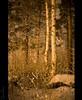 20081222_999_55b (Fantasyfan.) Tags: trees winter snow cold nature yellow topv111 night finland dark atmosphere oulu 20c fantasyfanin