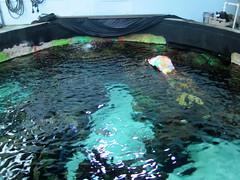 IMG_4801 (dolphingirl0609) Tags: world sea camp san texas dolphin lion seal killer whale orca beluga antonio advanced career