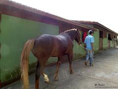 Haras Setti (W. Pereira) Tags: cavalos haras cocheira setti ibiúna clicksp wpereira