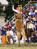 El pangaré (Eduardo Amorim) Tags: horses horse southamerica caballo uruguay cheval caballos cavalos prado montevideo pferde cavalli cavallo cavalo gauchos pferd hest hevonen chevaux gaucho 馬 américadosul montevidéu häst uruguai gaúcho 말 amériquedusud лошадь gaúchos 马 sudamérica suramérica américadelsur סוס südamerika jineteada حصان άλογο americadelsud gineteada ม้า americameridionale semanacriolla semanacriolladelprado eduardoamorim semanacriolladelprado2011 ঘোড়া
