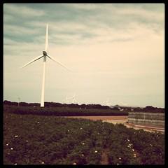 風力発電機いっぱい!