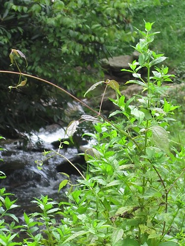 international health & wealth wild plants