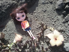 Day 117:365 Penny and the cactus flower.