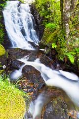 White Water Green Ferns. Near Croggan, Loch Spelve, Isle Of Mull, Inner Hebrides, Scotland. (Thackras/Simon Thackray) Tags: summer motion green water forest landscape scotland waterfall innerhebrides outdoor isleofmull ferns lochspelve croggan