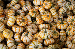 Pumpkin Gords