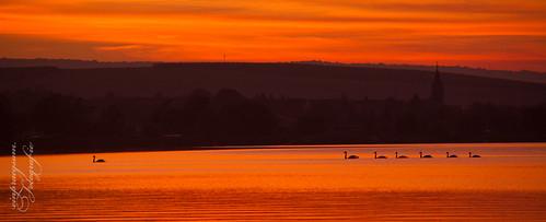 Schwanenfamilie im Sonnenuntergang