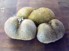mutant kiwis (maeve revels) Tags: fruit kiwi scrotum